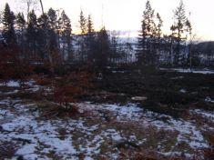 Kácení stromů v parku 19. 1. 20019